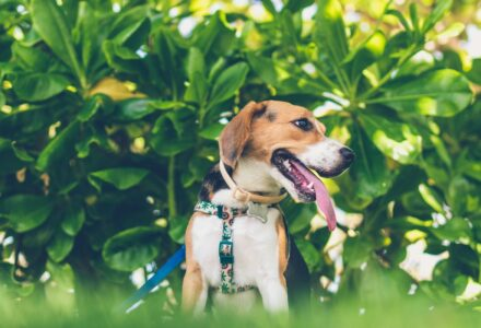 Where to take your dog in Wellington, New Zealand