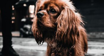 Where to take your dog in Paris