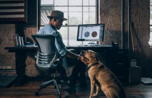 taking your dog to work