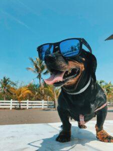 Signs of heatstroke in your dog