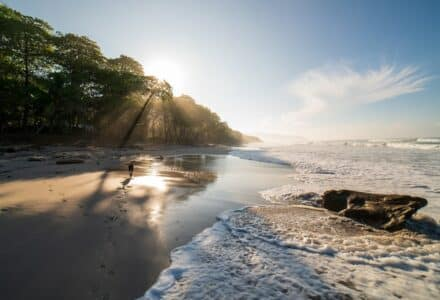 where to take your dog in Costa Rica
