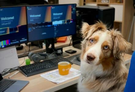 can I take my dog to work with me?