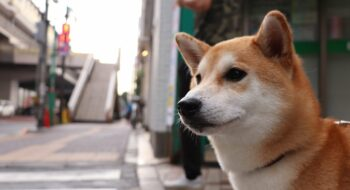 things to do with your dog in Japan