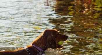 dog-friendly Seattle