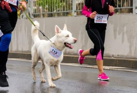 Which dog breed will enjoy running with me?