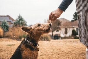 things to do with your dog in Austin Texas