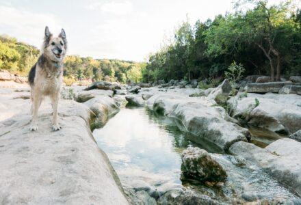 where to take your dog in Austin Texas