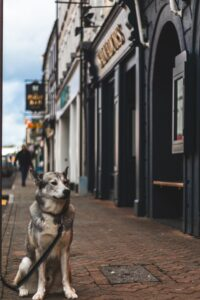 Where to take your dog in Dublin