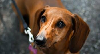 dog friendly delhi