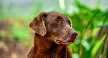 Tech startup hopes to make your dog live longer
