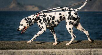 dog friendly rio de janeiro